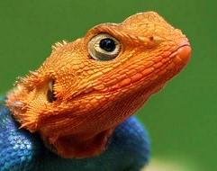 lizardbreath