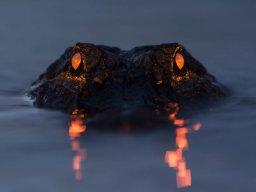 gators2417
