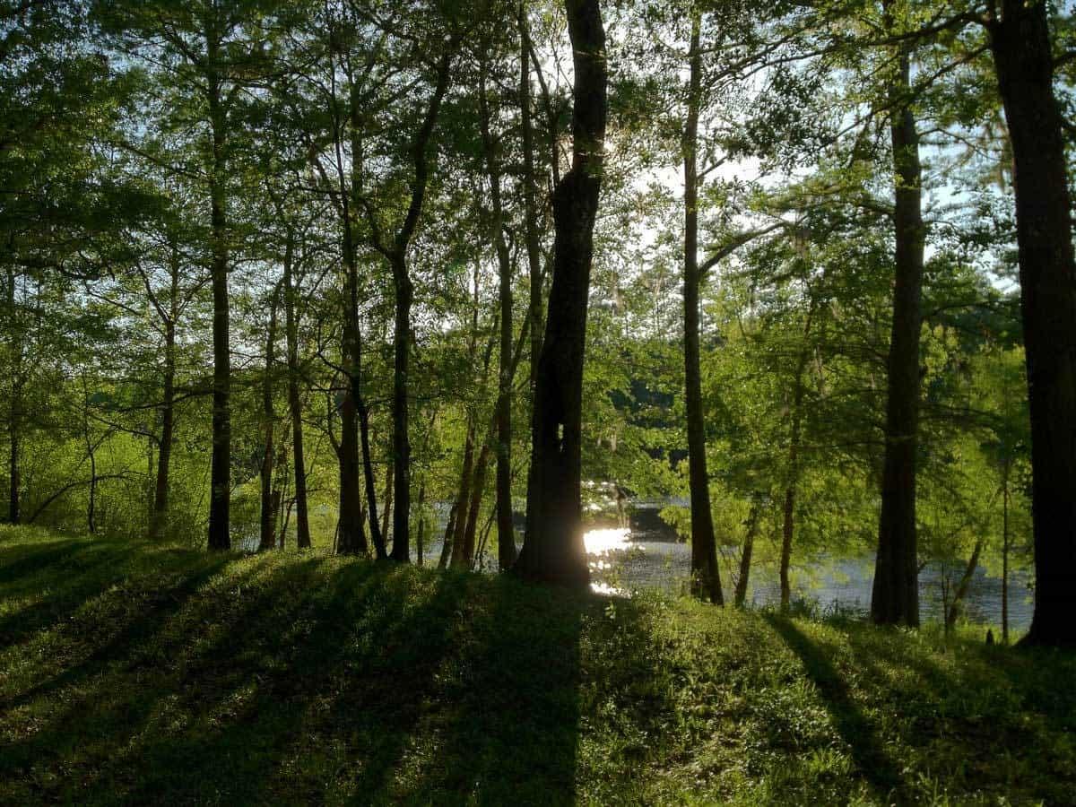 Pease_Brent_Florida_Gators_Nature_Walk_Ray