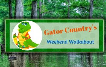 GC's Weekend Walkabout: Florida vs Alabama